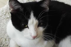 catsitting 1